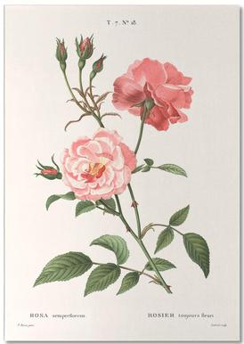 Rosier - Toujours Fleuri notitieblok