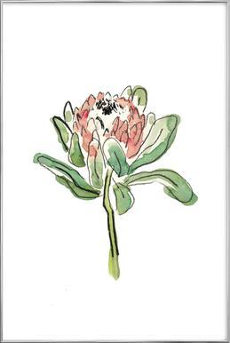 Protea -Poster im Alurahmen