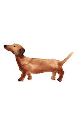 Sausage Dog alu dibond