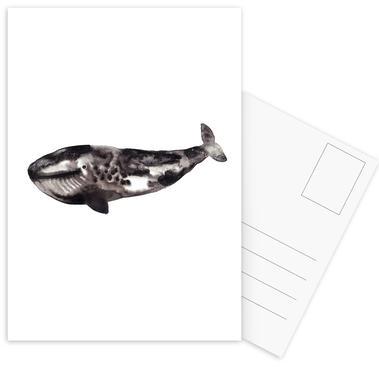Whale Postcard Set