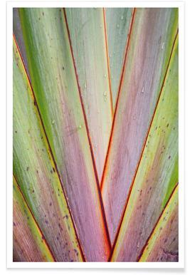 Flax Pattern
