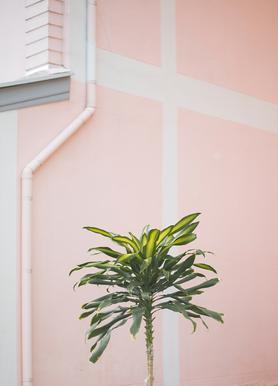 Pastel Palms -Leinwandbild