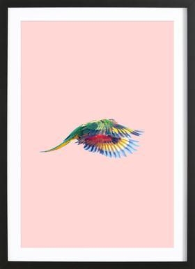 Pink Parrot 2