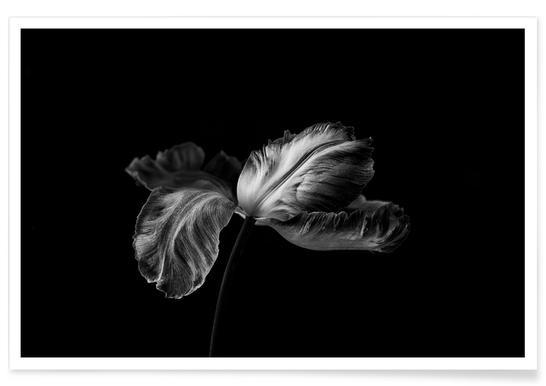 Tulip In Mono