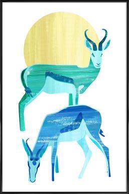 Antilopes in the sun