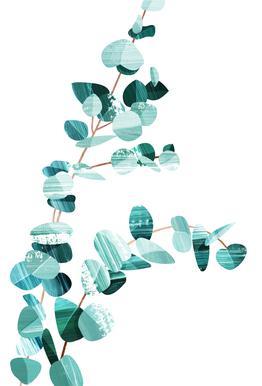 Eucalyptus -Alubild