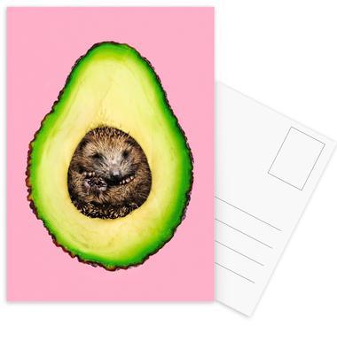 Hedgehocado Postcard Set