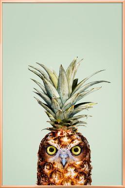 Pineapple Owl