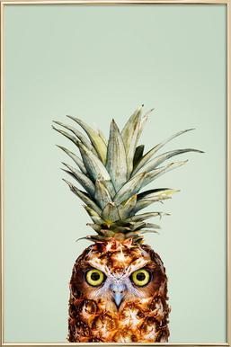Pineapple Owl -Poster im Alurahmen