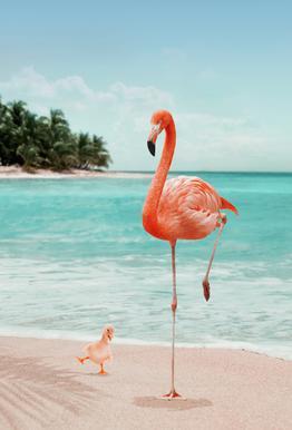 Wannabe Flamingo Aluminium Print