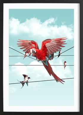 Colourful Stranger Framed Print