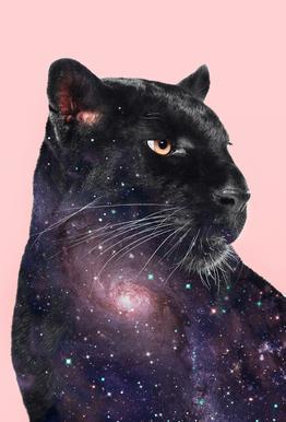 Galaxy Panther Plakat af aluminum