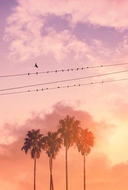 Birds on a Wire Aluminium Print