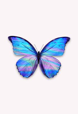 Holographic Butterfly Aluminium Print