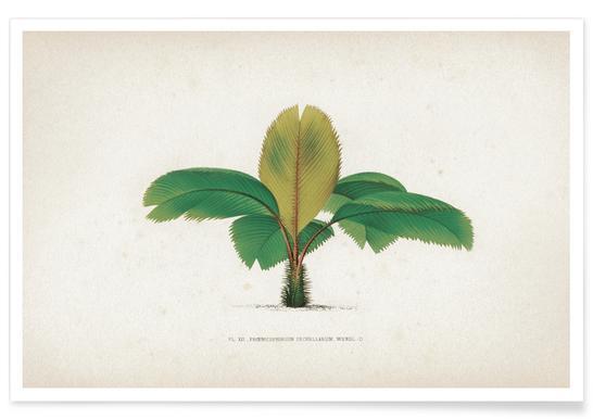 Les Palmiers 12 - Kerchove