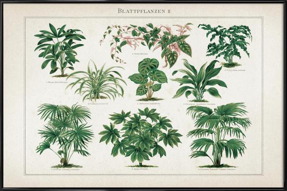 Blattpflanzen 2 - Meyers Framed Poster