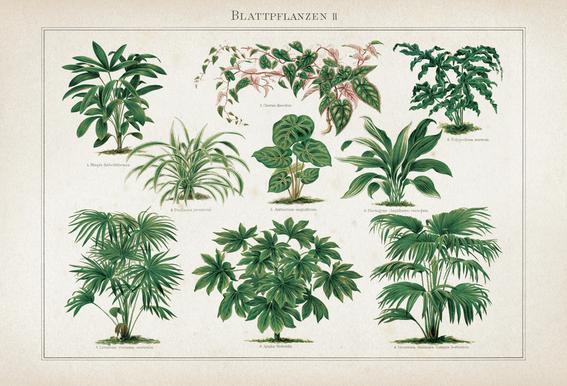 Blattpflanzen 2 - Meyers alu dibond