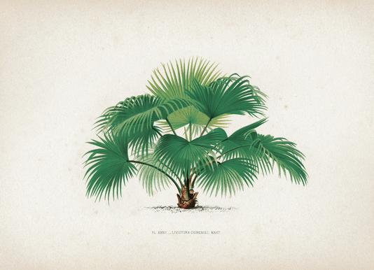 Les Palmiers 32 - Kerchove -Leinwandbild