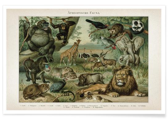 Äthiopische Fauna - Meyers Poster