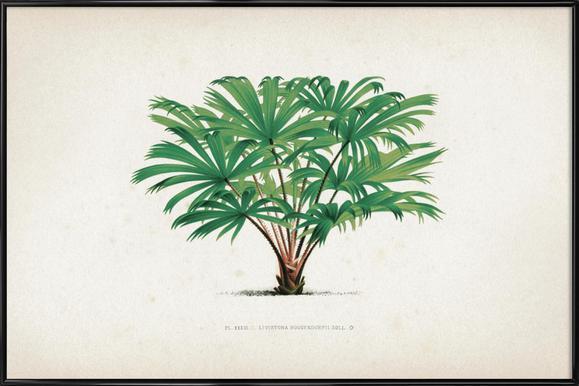 Les Palmiers 33 - Kerchove