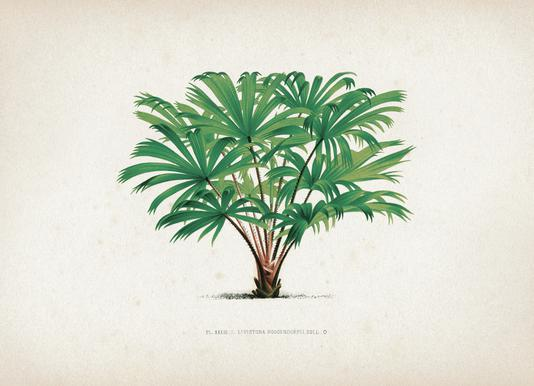 Les Palmiers 33 - Kerchove -Leinwandbild