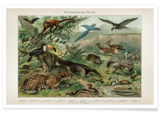 Neotropische Fauna - Meyers Poster