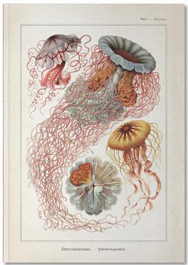 Tafel 8 - Haeckel Notebook