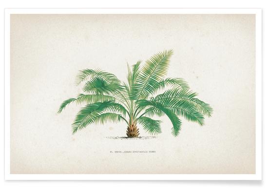 Les Palmiers 37 - Kerchove poster