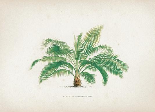 Les Palmiers 37 - Kerchove
