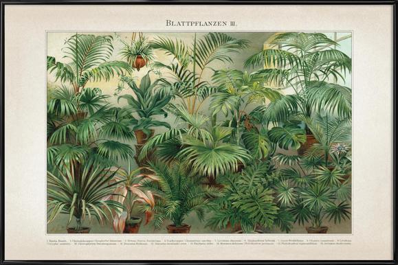 Blattpflanzen 3 - Meyers