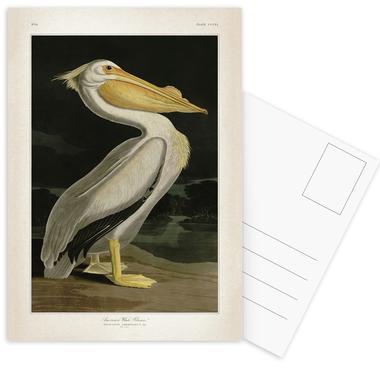 American White Pelican - Audubon -Postkartenset