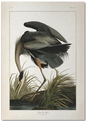 Great Blue Heron - Audubon bloc-notes