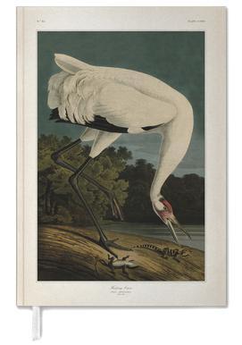 Hooping Crane - Audubon