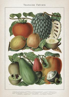 Tropische Früchte - Meyers