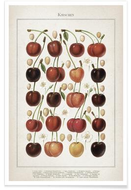 Kirschen - Meyers Poster
