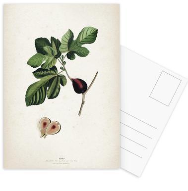 Ficus - Ehret -Postkartenset