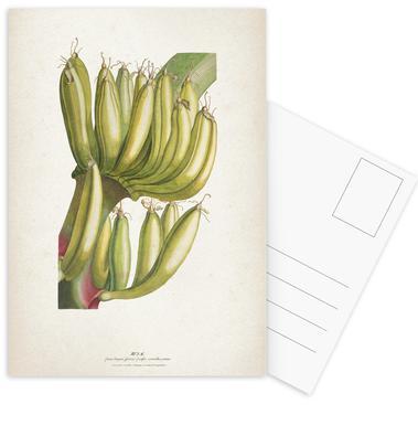 Musae Primus - Ehret cartes postales