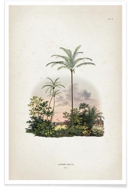 Astrocaryum Vulgare - Martius poster
