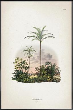 Astrocaryum Vulgare - Martius ingelijste poster