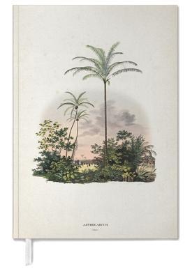 Astrocaryum Vulgare - Martius