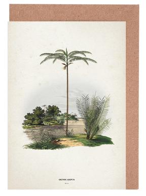 Oenocarpus Bataua - Martius Greeting Card Set