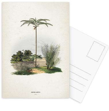 Oenocarpus Bataua - Martius -Postkartenset