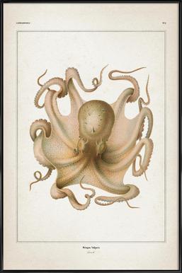 Octopus Vulgaris - Vérany Framed Poster