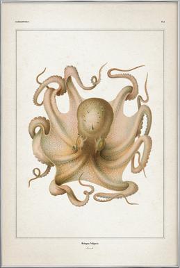 Octopus Vulgaris - Vérany -Poster im Alurahmen