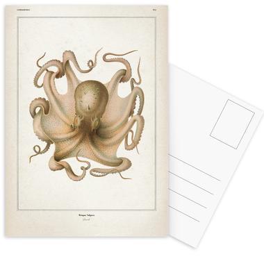 Octopus Vulgaris - Vérany Postcard Set