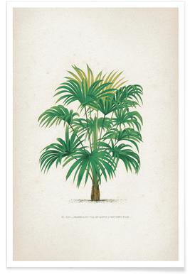 Les Palmiers 25 - Kerchove Poster