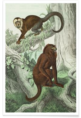 Affen 3 - Schubert Poster