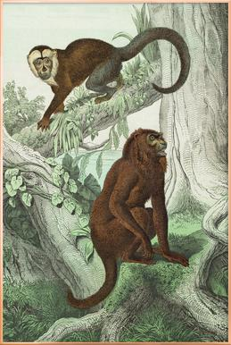 Affen 3 - Schubert -Poster im Alurahmen
