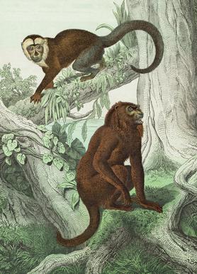 Affen 3 - Schubert -Leinwandbild