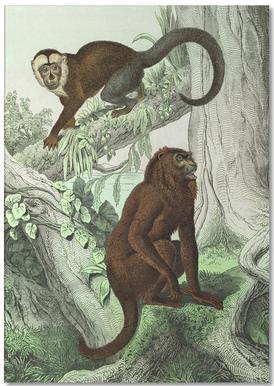Affen 3 - Schubert
